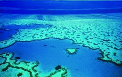 Heart Reef, in the Whitsundays. © Queensland Tourism
