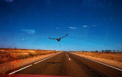 South Australia. © Dean Sewell